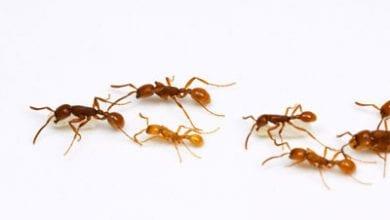 ants-army.jpg