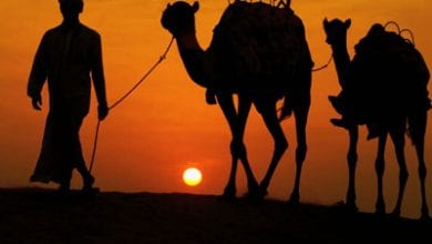 camel-arab.jpg