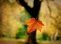 fallen-leaf.jpg