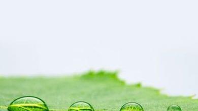drops1.jpg