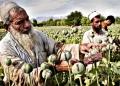 opium-afgan.jpg