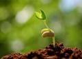 seed-grow.jpg