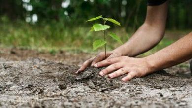 planting-tree.jpg
