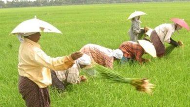 agricukt.jpg
