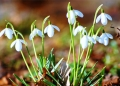 flower-nature.jpg