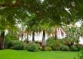 garden33.jpg