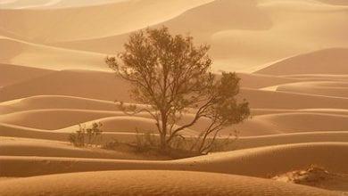 tree-desert.jpg
