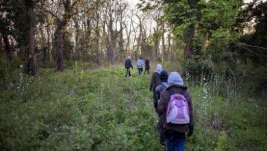 Calais-forest.jpg