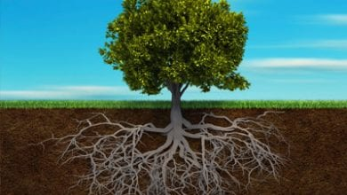 root-tree.jpg