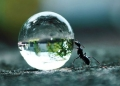 ant-drop.jpg