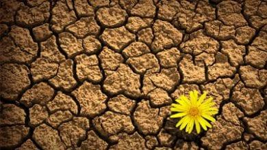 flower-dry.jpg