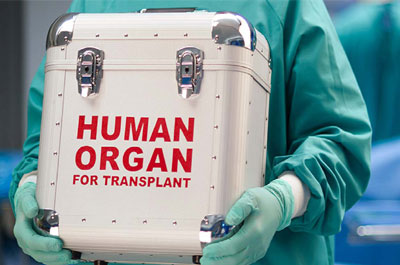 Human-Organ.jpg