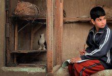 Photo of ഇറാഖിലെ ആദ്യ സ്വതന്ത്ര ചലചിത്രമേളയും വെല്ലുവിളികളും